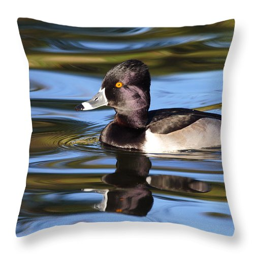 Ring-necked Duck Throw Pillow featuring the photograph Rings around Ring-necked Duck by Andrew McInnes