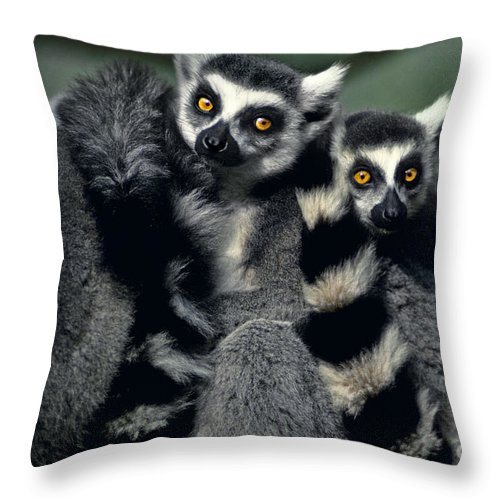 Africa Throw Pillow featuring the photograph Ringtailed Lemurs Portrait Endangered Wildlife by Dave Welling