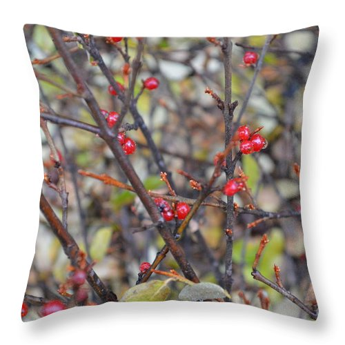 Berries Throw Pillow featuring the photograph Ripe For The Picking by Brian Boyle