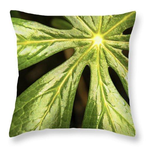 Usa Throw Pillow featuring the photograph Rising Star The Mayapple Of Spring by LeeAnn McLaneGoetz McLaneGoetzStudioLLCcom