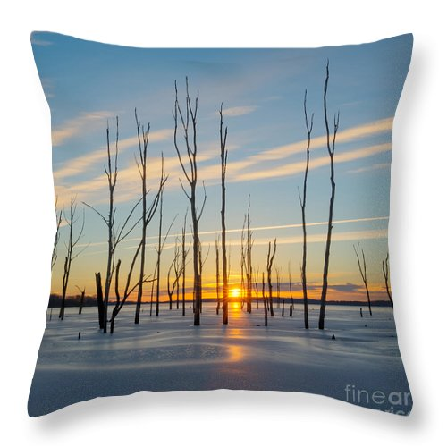Frost Bite Throw Pillow featuring the photograph Rising Throught The Sticks by Michael Ver Sprill