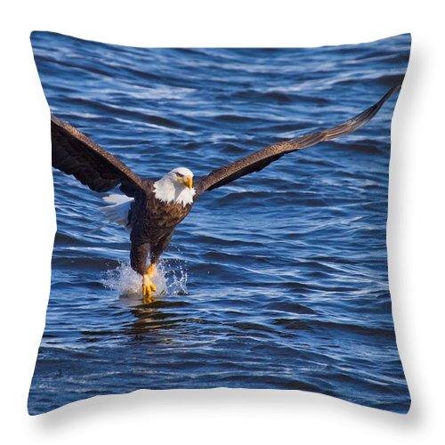 Bird Throw Pillow featuring the photograph River Dance by John Absher