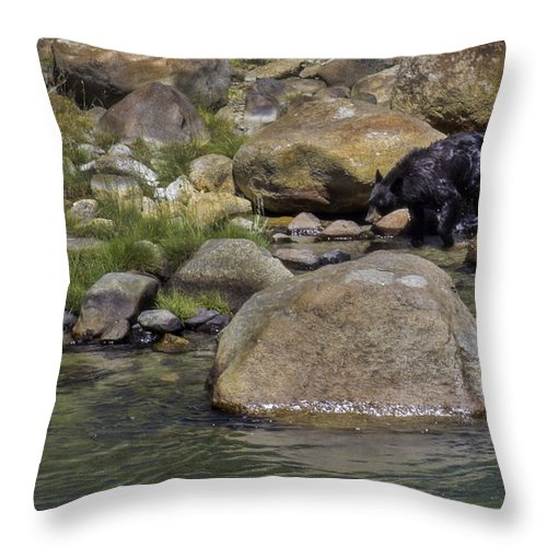 Black Bear Throw Pillow featuring the photograph River Walk by Carolyn Fox