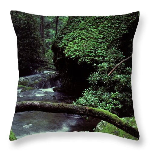Smoky Mountains Throw Pillow featuring the photograph Roaring Fork Creek by Cyril Furlan