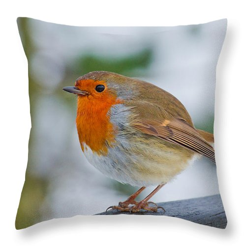 Robin Throw Pillow featuring the photograph Robin 3 by Scott Carruthers