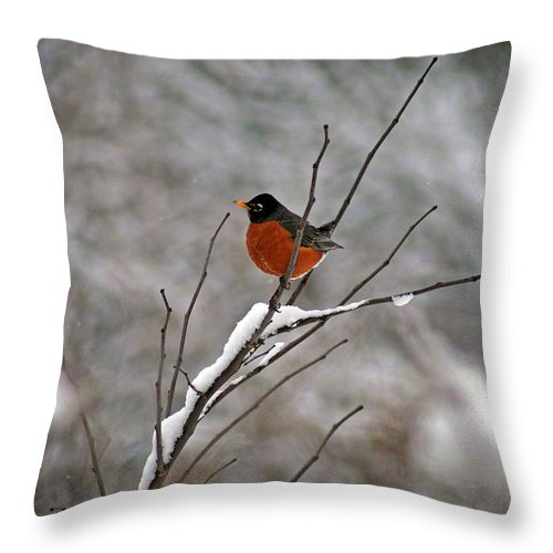 Robin Throw Pillow featuring the photograph Robin In Winter by Karen Adams