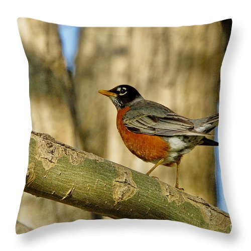 Robin Throw Pillow featuring the photograph Robin Red-breast by Andrea Kollo