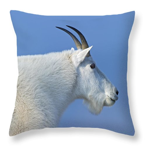 Rocky Mountain Goat Throw Pillow featuring the photograph Rocky Mountain Goat by Gary Langley