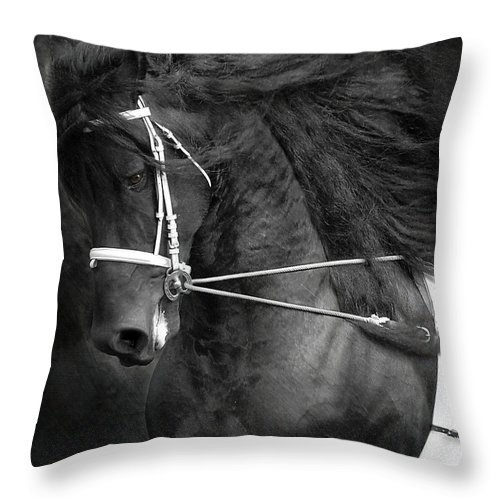 Friesian Throw Pillow featuring the photograph Romke 401 Long Line by Fran J Scott