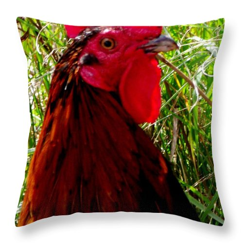 Rooster Throw Pillow featuring the photograph Rooster The Male Chicken by Gail Matthews