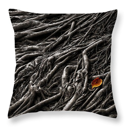 Forest Throw Pillow featuring the photograph Roots 2 by Mary Jo Allen