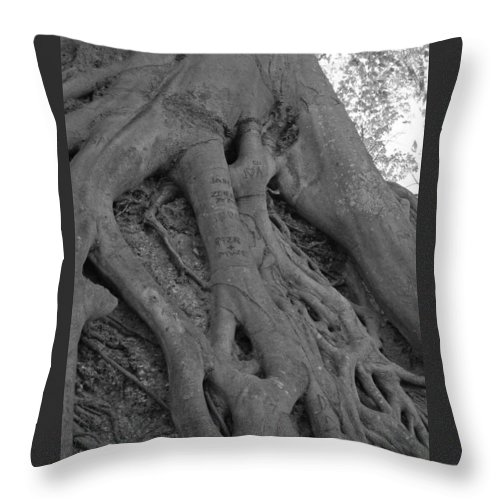 Tree Throw Pillow featuring the photograph Roots II by Suzanne Gaff