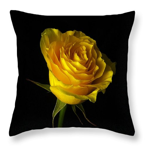 Rose Throw Pillow featuring the photograph Rose 1 by Ingrid Smith-Johnsen