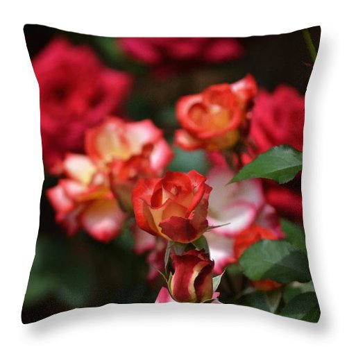 Floral Throw Pillow featuring the photograph Rose 309 by Pamela Cooper