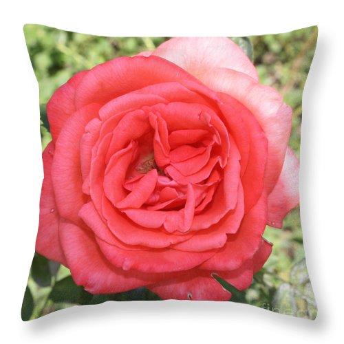 Rose At Clark Gardens Throw Pillow featuring the photograph Rose At Clark Gardens by John Telfer
