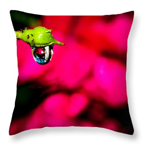Drenched Throw Pillow featuring the photograph Rose Bud After Rain by Alex Grichenko