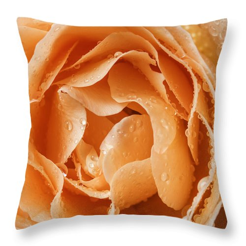 Rose Throw Pillow featuring the photograph Rose In Rain by Vishwanath Bhat
