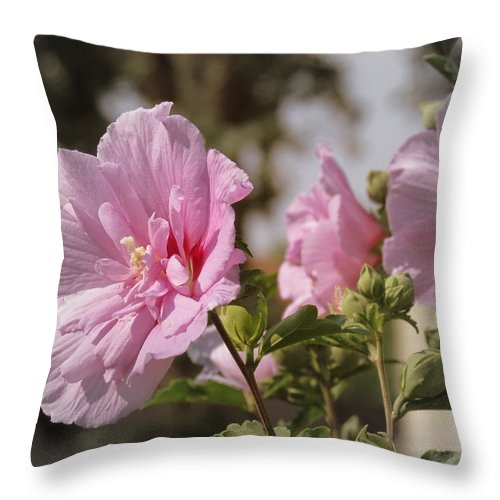 Rose Of Sharon Throw Pillow featuring the photograph Rose Of Sharon by Kay Novy