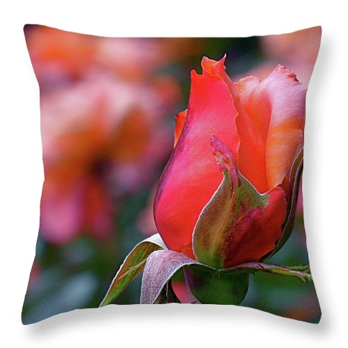 Red Rose Throw Pillow featuring the photograph Rose On Rose by Rona Black