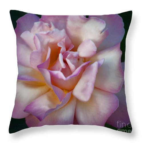 Rose Throw Pillow featuring the photograph Rose Petals Straight From My Heart by Gwyn Newcombe