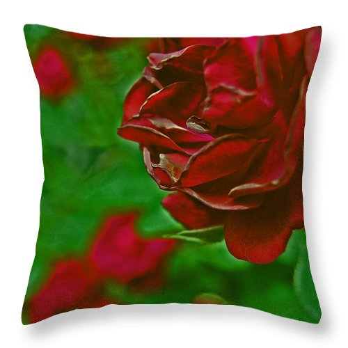 First Star Art Throw Pillow featuring the photograph Rose Red By Jrr by First Star Art