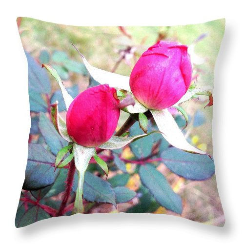 Rose In My Yard. Pink Roses. Photograph. Natural Beauty. Landscape. Rose Wang Image. Throw Pillow featuring the photograph Rose by Rose Wang