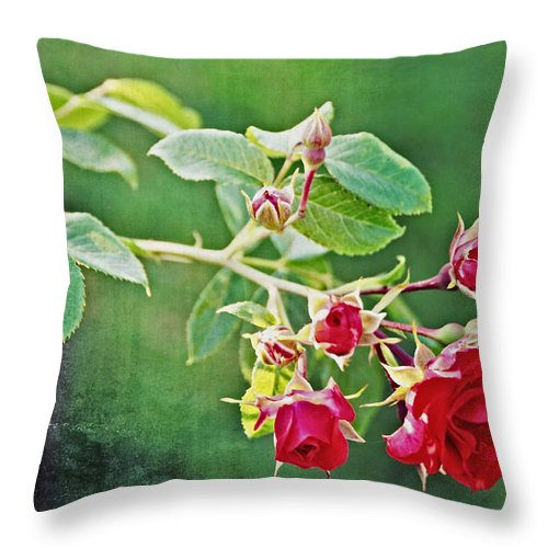 Rose Throw Pillow featuring the photograph Roses Are Red My Love by Mike Martin