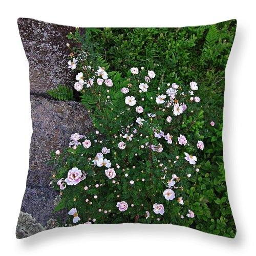 Roses Throw Pillow featuring the photograph Rosy Rock by MTBobbins Photography