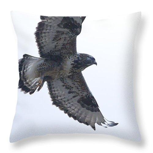 Hawk Throw Pillow featuring the photograph Rough-legged Hawk In Flight-signed-#4313 by J L Woody Wooden