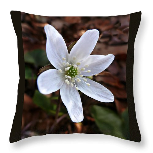 Hepatica Americana Throw Pillow featuring the photograph Wild Round-lobe Hepatica by William Tanneberger