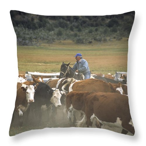 Cowboy Throw Pillow featuring the photograph Cattle Round Up Patagonia by James Brunker