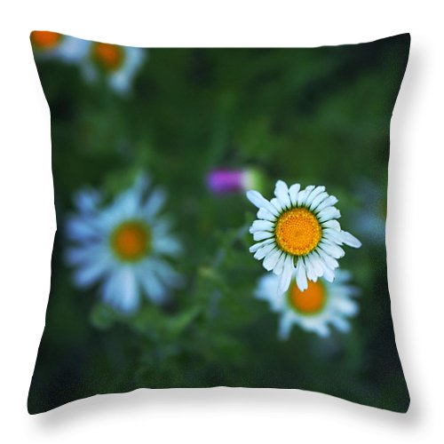 Blackfoot Daisies Throw Pillow featuring the photograph Roxy by Trish Mistric