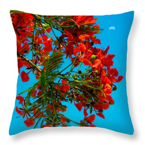Hawaii Throw Pillow featuring the photograph Royal Pioncianna 11 by Dawn Eshelman