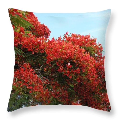 Trees Throw Pillow featuring the photograph Royal Poinciana Branch by Mary Deal