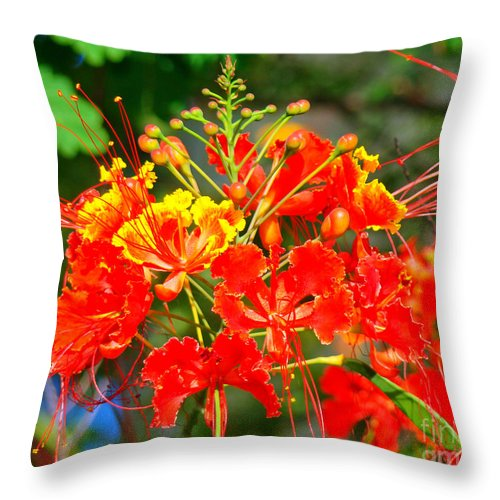 Royal Poinciana Throw Pillow featuring the photograph Royal Poinciana by Nancy L Marshall
