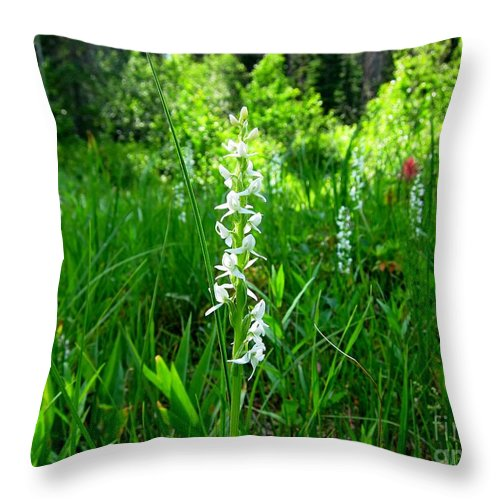 Royal Rain Orchid Throw Pillow featuring the photograph Royal Rain Orchid by Lena Photo Art