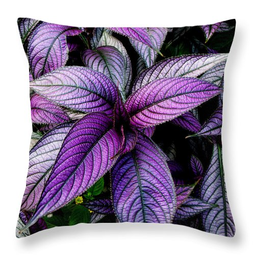 Ron Tackett Throw Pillow featuring the photograph Royal by Ron Tackett