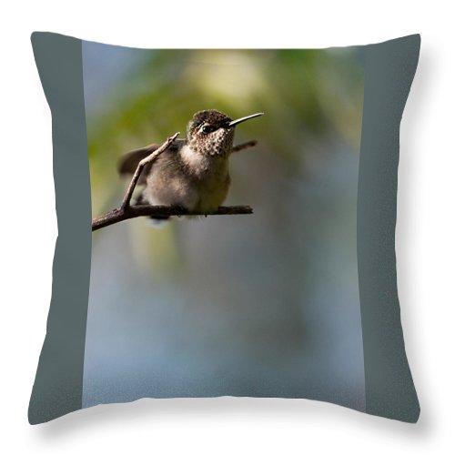 Ruby-throated Hummingbird Throw Pillow featuring the photograph Ruby-throated Hummingbird by Melinda Fawver