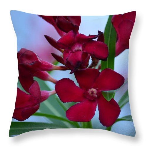 Ruby Tuesday Throw Pillow featuring the photograph Ruby Tuesday by Maria Urso