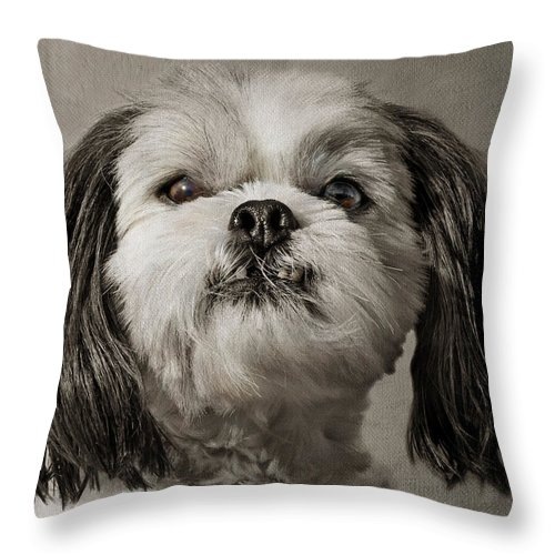Dogs Throw Pillow featuring the photograph Rudy by Nikolyn McDonald