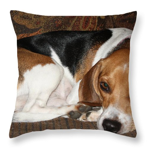 Ruff Day Throw Pillow featuring the photograph Ruff Day by John Telfer