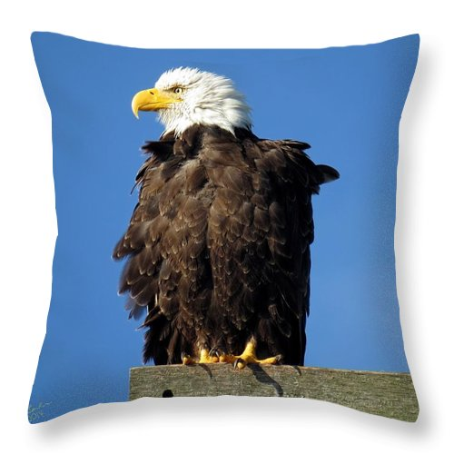 Eagle Throw Pillow featuring the photograph Ruffled Eagle by Rick Lawler