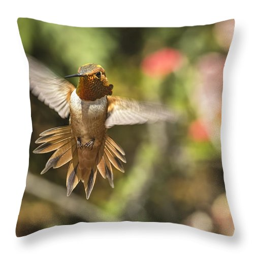 Rufous Throw Pillow featuring the photograph Rufous by Mike Herdering