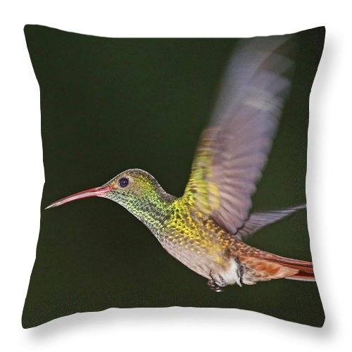 Nature Throw Pillow featuring the photograph Rufous-tailed Hummingbird by Mike Dickie
