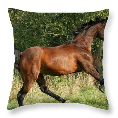 Horse Throw Pillow featuring the photograph run by Angel Ciesniarska