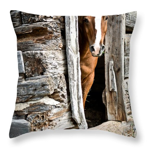 Throw Pillow featuring the photograph Rustic Horse Scene by Cheryl Baxter