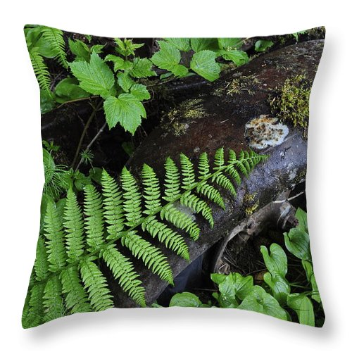 Antique Throw Pillow featuring the photograph Rusting by Cathy Mahnke