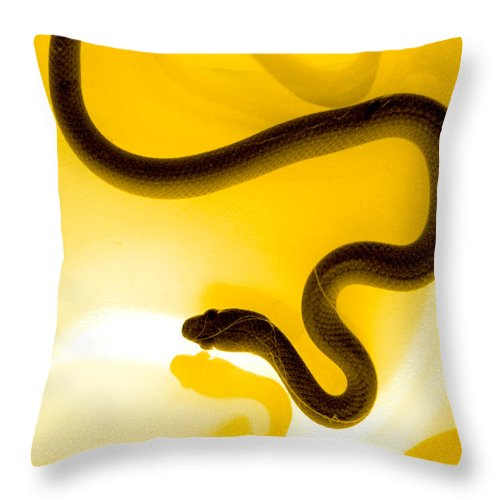 Animal Throw Pillow featuring the photograph S by Holly Kempe