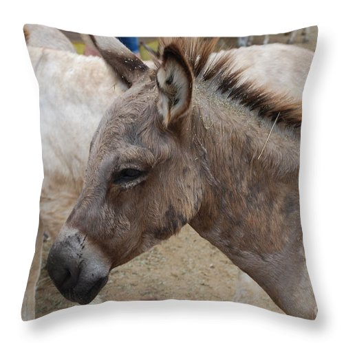 Donkey Throw Pillow featuring the photograph Sad Wild Donkey by DejaVu Designs