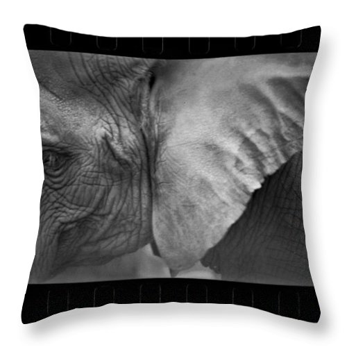 Nature Throw Pillow featuring the photograph Sadness by Kevin Eatinger